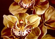 Orchid Art Paintings - Yellow Cymbidium Orchid by Alfred Ng