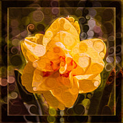 Witkowski Posters - Yellow Daffodil in an Abstract Garden Painting Poster by Omaste Witkowski