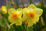 All - Yellow Daffodil Painting by Andee Photography