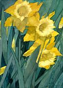 Yellow Daffodils Print by Greta Corens