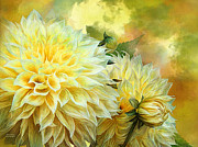 Carol Cavalaris Framed Prints - Yellow Dahlias Framed Print by Carol Cavalaris