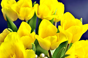 March Photos - Yellow Easter lilies. by Tommy Hammarsten