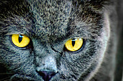 Stock Photo Digital Art - Yellow eyes by Vincent Monozlay