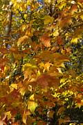 Tannis  Baldwin - Yellow Fall