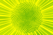 Twilight Vision Art - Yellow Fibonacci Sunflower by Twilight Vision