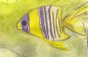 Denestia  Jo - Yellow Fish with Purple...