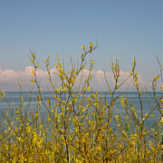 Indiana Dunes Posters - Yellow Flower Beach Veiw  Poster by Lynne Dohner