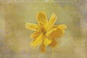 Judy Hall-Folde - Yellow Flower