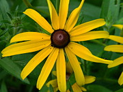 Linda Brown - Yellow Flower