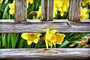 Wood Bench Posters - Yellow Flowers by the Bench Poster by David Letts