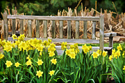 Wood Bench Posters - Yellow Flowers by the Weathered Bench Poster by David Letts