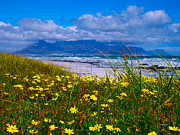 Clouds Photographs Originals - Yellow flowers Table Mountain by Charl Bruwer