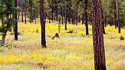 Yellow Forest Print by Kume Bryant