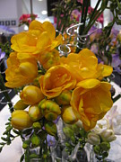 Yellow Freesia Print by Alfred Ng