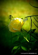 Sherry Gombert - Yellow Glowing Rose