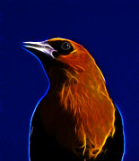 Blackbird Mixed Media Metal Prints - Yellow Headed Blackbird Metal Print by Shane Bechler