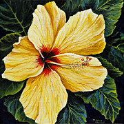 Tropical Flower Painting Posters - Yellow Hibiscus Poster by Darice Machel McGuire