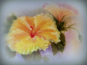 Trumpet Digital Art - Yellow Hibiscus by Kay Novy