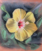 Florida Flowers Pastels Framed Prints - Yellow Hibiscus Framed Print by Melinda Saminski