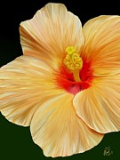 Rand Herron - Yellow Hibiscus