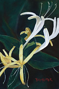 Vine Pastels - Yellow Honeysuckle by Angela Bruskotter
