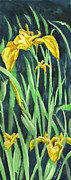 Richard De Wolfe Prints - Yellow Iris Print by Richard De Wolfe