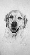 Michelle Harrington - Yellow Lab