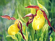 Watercolour Posters - Yellow Lady Slippers Poster by Joan A Hamilton