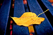 Fallen Leaf Photos - Yellow leaf on bench II by Silvia Ganora