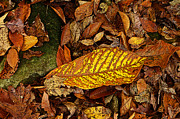 Forest Floor Prints - Yellow Leaf Print by Paul Mashburn