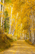 Randy Giesbrecht - Yellow Leaf Road