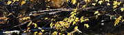 Linda Knorr Shafer - Yellow Leaves In Autumn