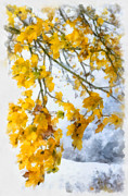 Fall Leaves Framed Prints - Yellow leaves in fall - early winter brings the first snow - digital aquarell painting Framed Print by Matthias Hauser