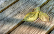 Boardwalk Prints - Yellow Leaves on Wood Print by Scott Norris