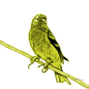 Goldfinch Digital Art Prints - Yellow Lesser Goldfinch - 2235 F S M Print by James Ahn