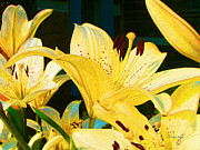 Floral Paintings - Yellow Lilies by Claire Bull