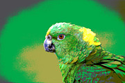 Long-lived Photos - Yellow-naped Amazon Parrot by RM Vera
