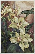 Lisa Prusinski - Yellow Orchid