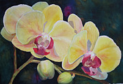 Judy Mercer - Yellow Orchids