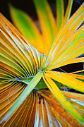 Frond Prints - Yellow Palm 2 Print by Stephen Anderson