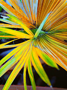 Vibrant Colors Photos - Yellow Palm 3 by Stephen Anderson