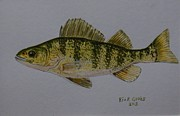 The 60s Paintings - Yellow Perch by Richard Goohs