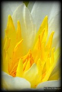 Terri K Designs - Yellow Petals
