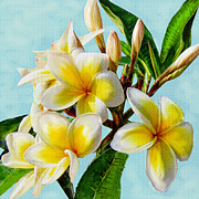 Jane Schnetlage - Yellow Plumeria