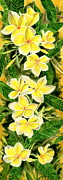 Sympathy Painting Posters - Yellow Plumeria Poster by Melly Terpening