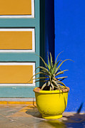 Majorelle Garden Prints - Yellow Pot  Print by Mick House