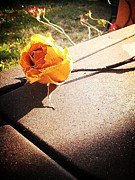 Lee Farley Prints - Yellow Rose 2 Print by Lee Farley