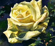 Anne Gifford - Yellow Rose