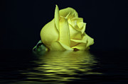 Black Rose Prints - Yellow Rose II Print by Sandy Keeton