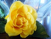 Joanie Leport - Yellow Rose